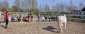 Individuele sessie met paard - kopie